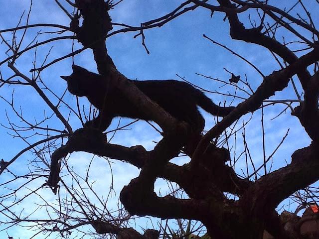 gatto sull' albero