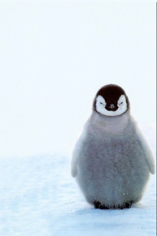 Penguin Baby in Snow iPhone Wallpaper
