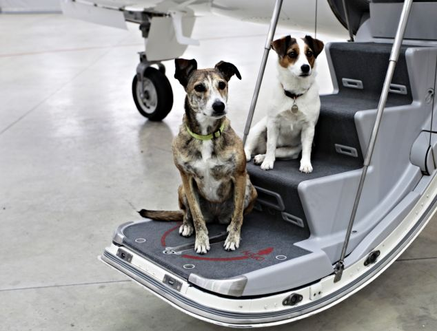Pets on Jets travel furs class!
