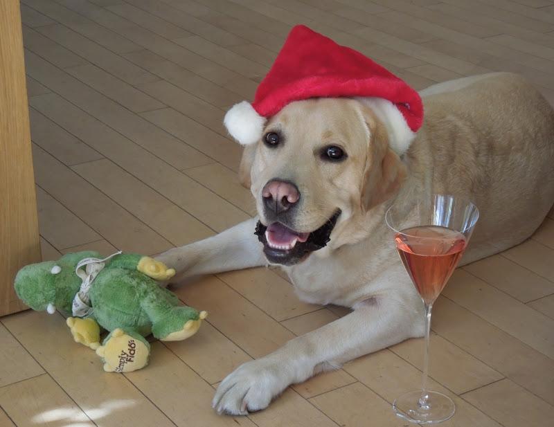 Christmas hat Cooper