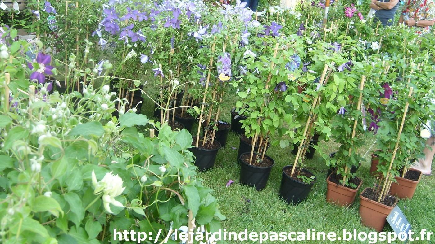 Le jardin de pascaline mon coup de coeur aux jardins d for Le jardin aux epilobes