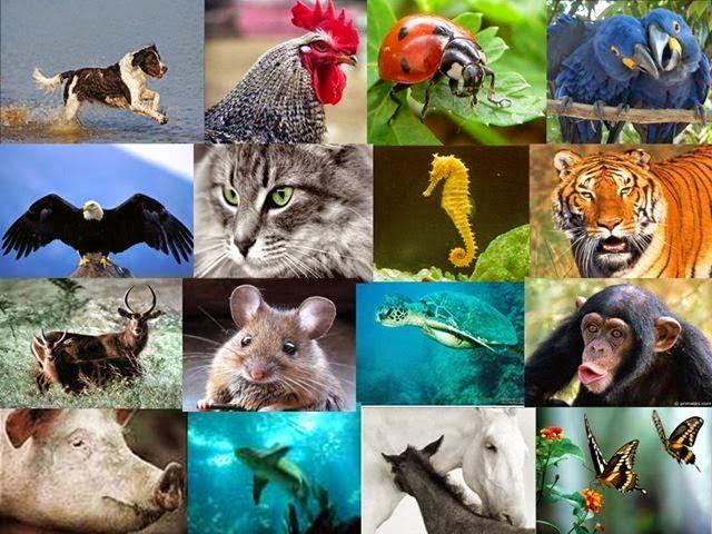 Ação Pelos Direitos dos Animais