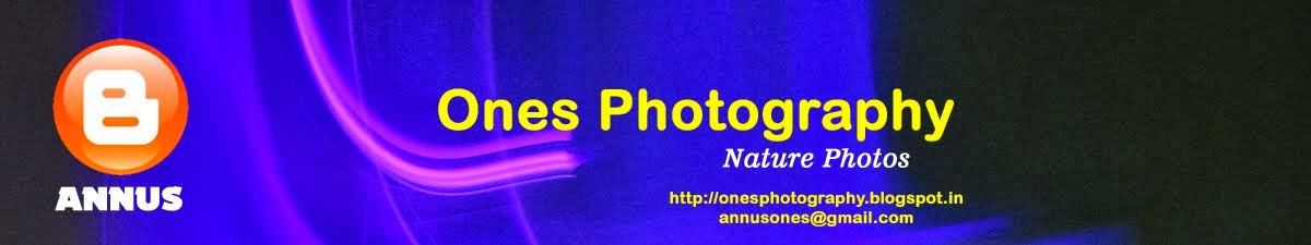 Ones Photography