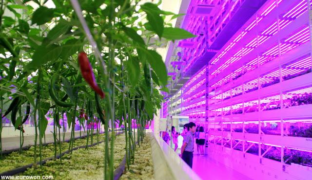 Pabellón del cultivos interiores en la Expo de Jardines
