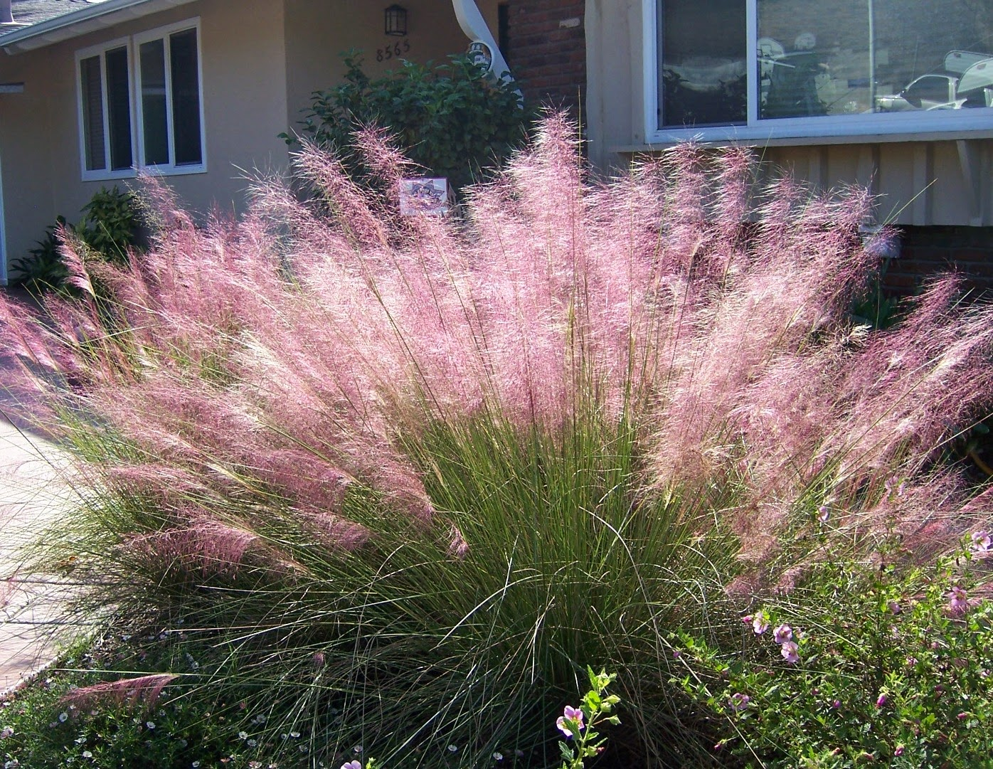 Greenzone landscape design sun loving plants that aren 39 t for Landscape grasses for sun