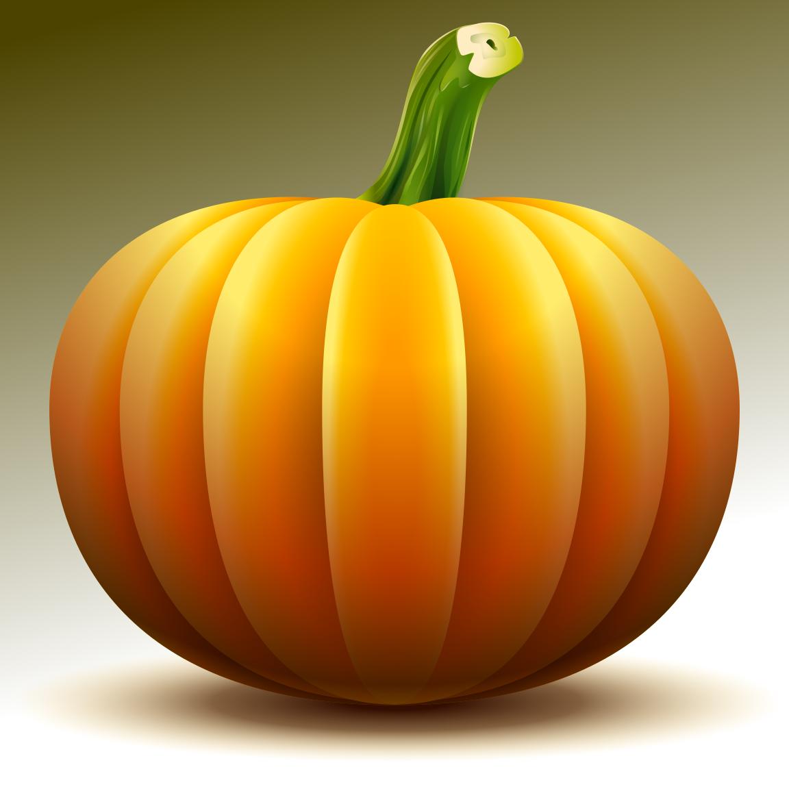 squash pumpkin gourd family