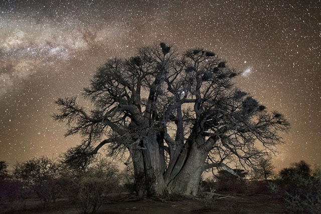 oldest trees beth moon diamond nights photography-10