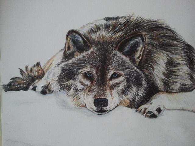 I disegni anima ti lupi for Disegni a matita di cani