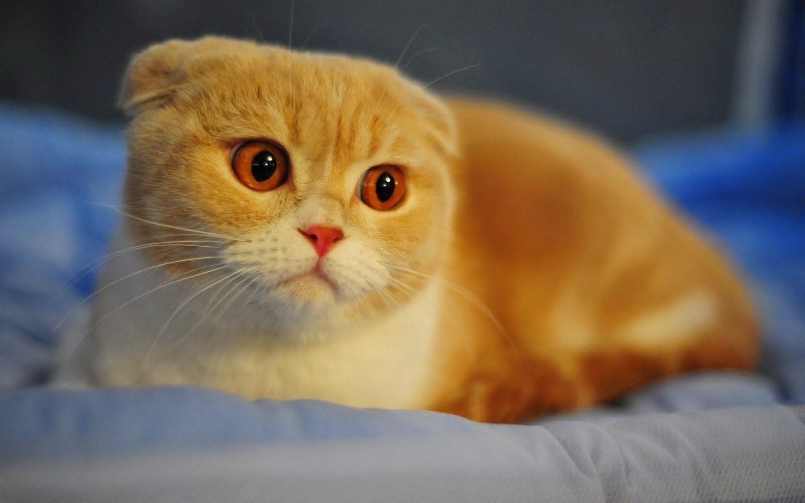15 curiosidades sobre gatos que você provavelmente não sabia
