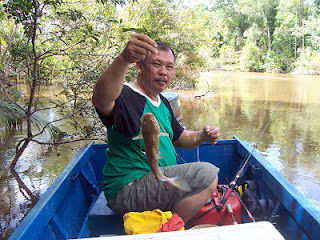 Fishing Catfish at Kp Bukit Puan
