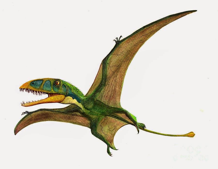 Výsledek obrázku pro dimorphodon