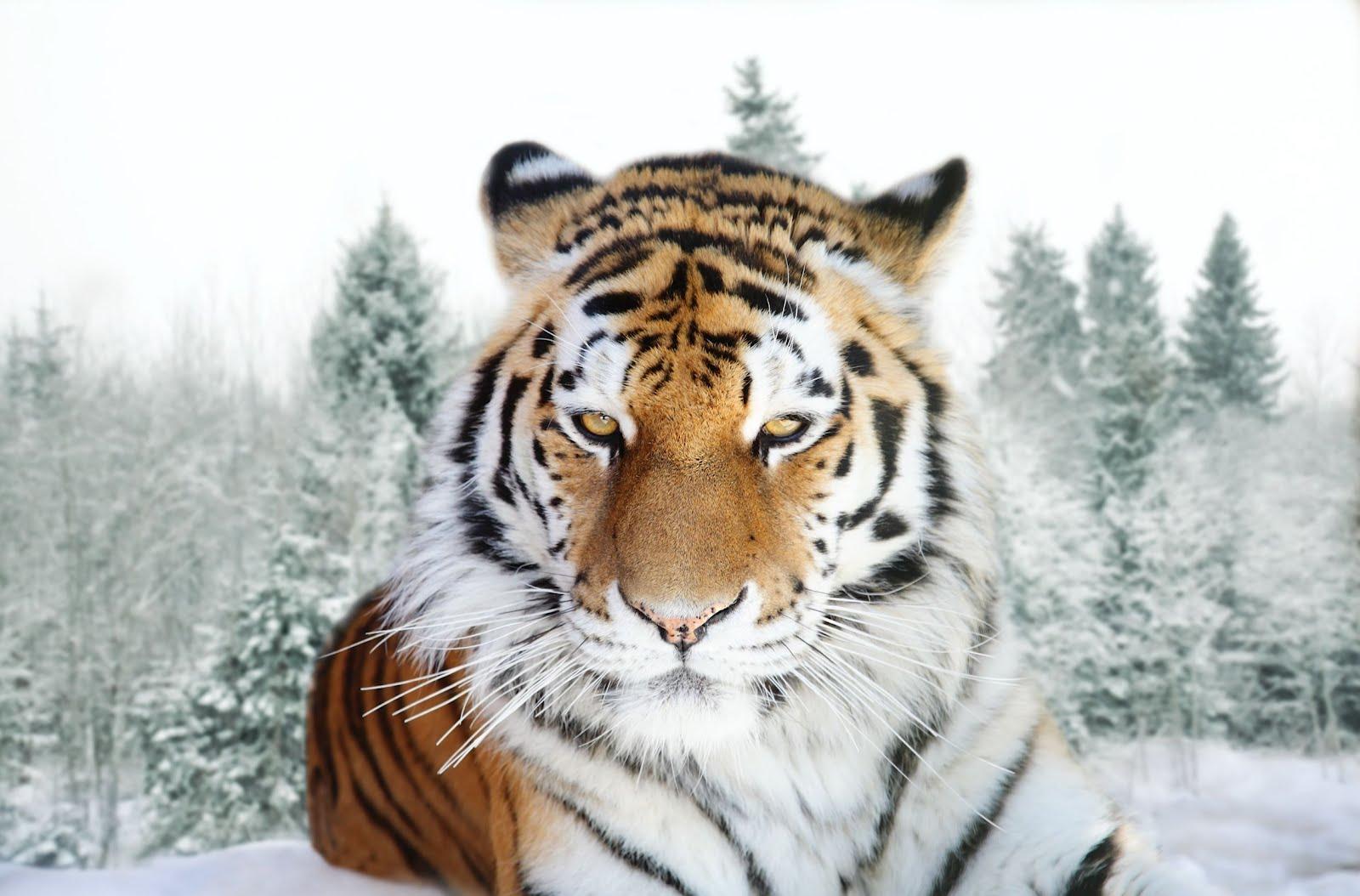 imagenes animales salvajes: