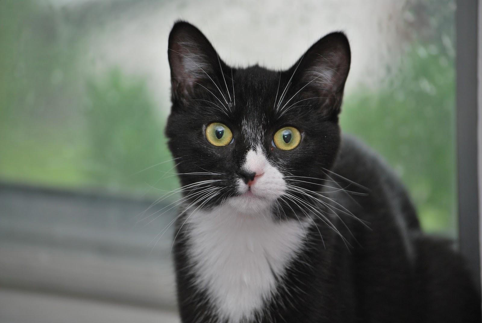 Petfinder Alley Cat Rescue