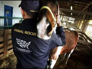 neglected starving horse is rescued