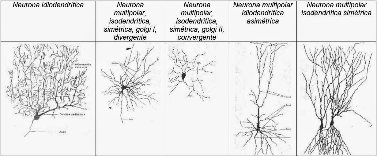 El Universo de la Neurociencia diciembre 2014