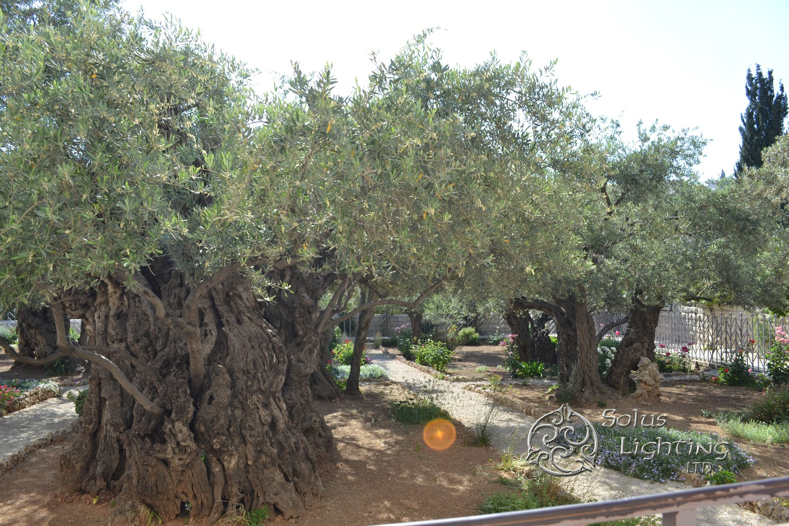 After we floated out of the Dead Sea we continued our travels into Jerusalem. The photo above is of the Garden of Gethsemani which is a place located on ... & Solus Lighting goes international | Solus Lighting LTD azcodes.com