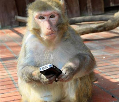 Monyet Main Hp