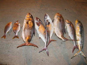 Pescaria do Mês (Fevereiro 2014 )