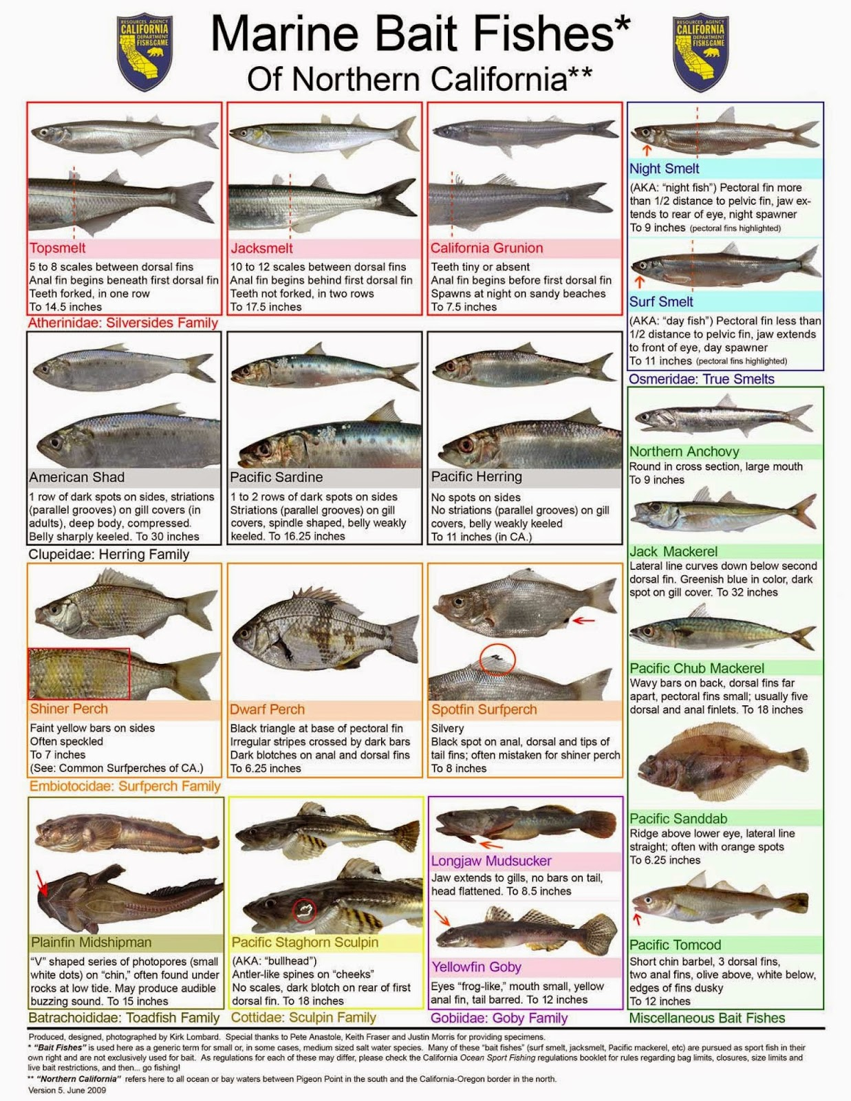 Hunting and fishing california march 2015 for California saltwater fish species