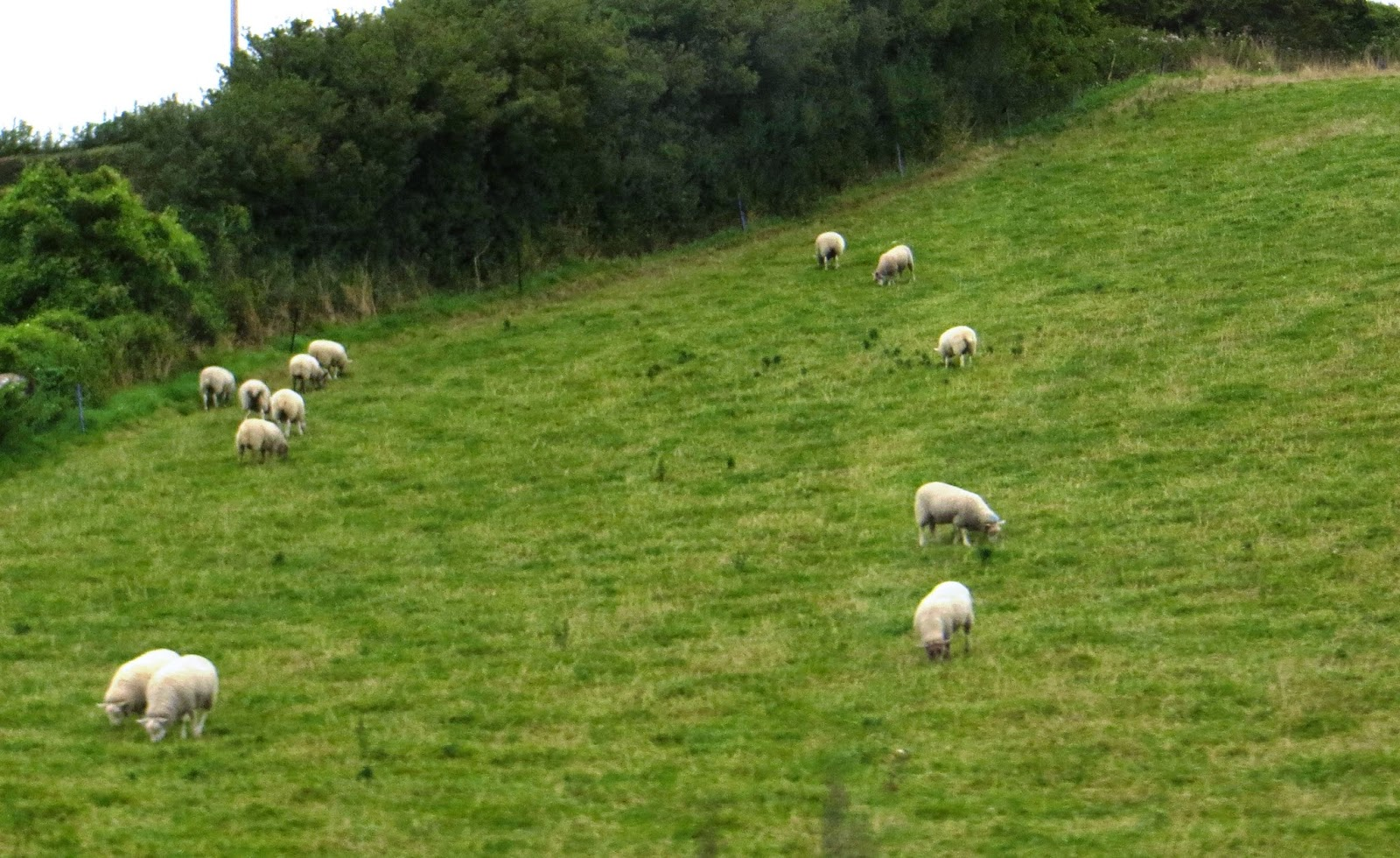 one flock one shepherd