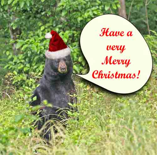 latest funny pictures funny christmas animals