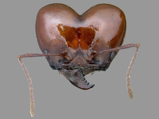 Semut, Alien, Mikroskop, serangga