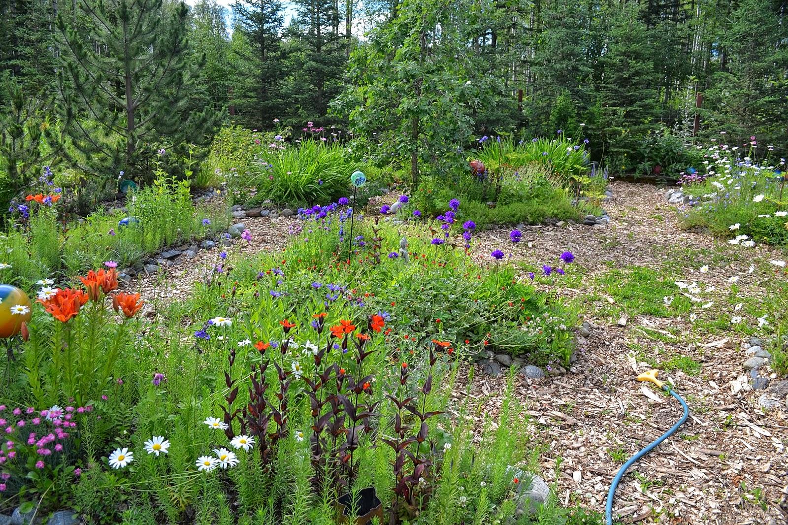 Alison S Gardens Mediterranean Garden: The Outlaw Gardener: Alison's Wasilla Garden