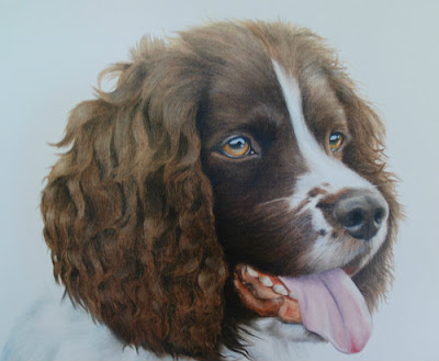 Springer Spaniel pet portrait oil on canvas