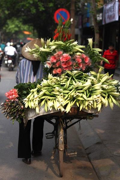 Hình ảnh hoa đẹp - Hoa loa kèn 08