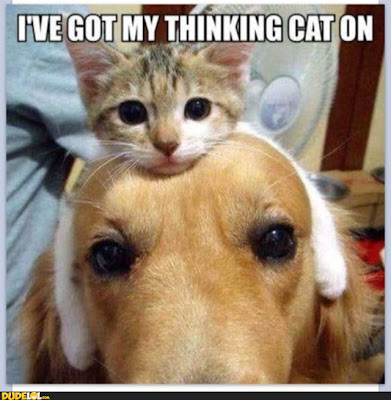 I've got my thinking Cat on