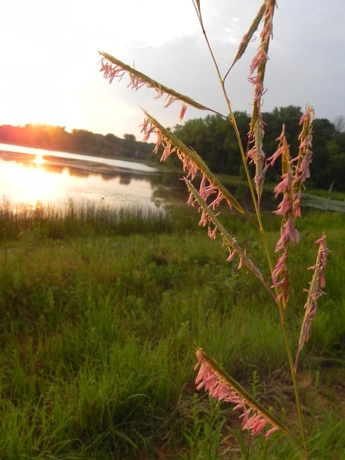 Wild Ones Twin Cities Minnesota: June Summer Garden Tour - Bush Lake ...