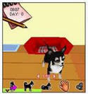 My Little Dogs 3D - Jogos Java