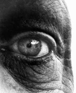 Sombra y luz: el arte de la fotografía (Brandt)