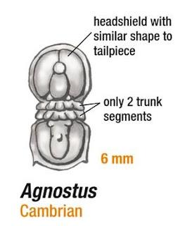 Agnostus