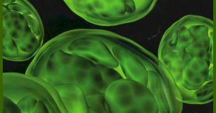 healthiful living: chlorophyll, Skeleton