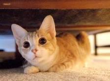 ¿Habéis visto este corto cortísimo? Gato-asustado1