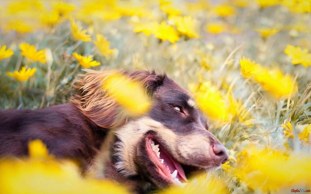 ver fotos de perros
