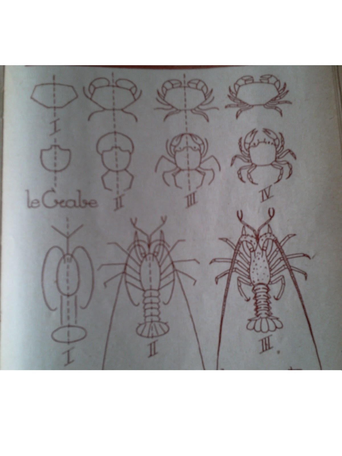 Dessins astuces pour debutants dessins de crabe et de - Dessiner un crabe ...