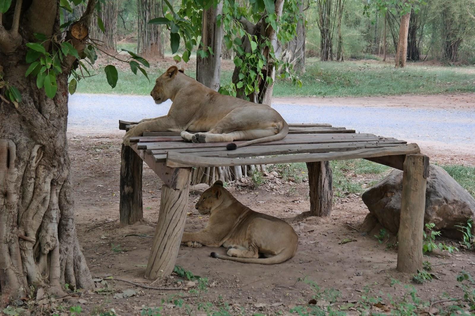 Summer Moments in Thailand: Exploring Kanchanaburi- Safari Park Open Zoo &amp...