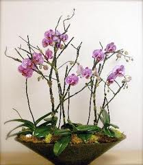 Floristeria herga - Tiestos para orquideas ...