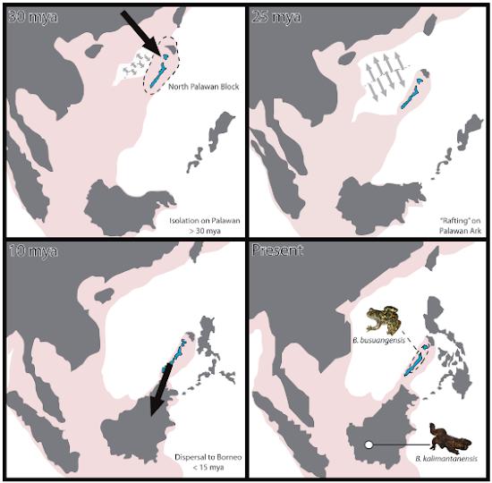 Tectonic Movement of Palawan Island