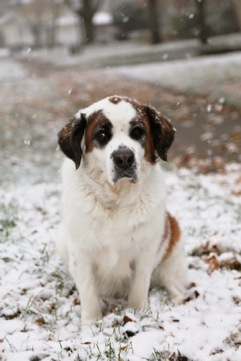 Top 10 cold weather dog breeds for a family with children