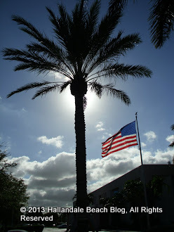 Palm tree obstructing the sun at Hallandale Beach City Hall