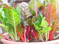 Chard in Container Gardening
