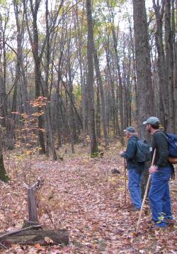 hikers in woods