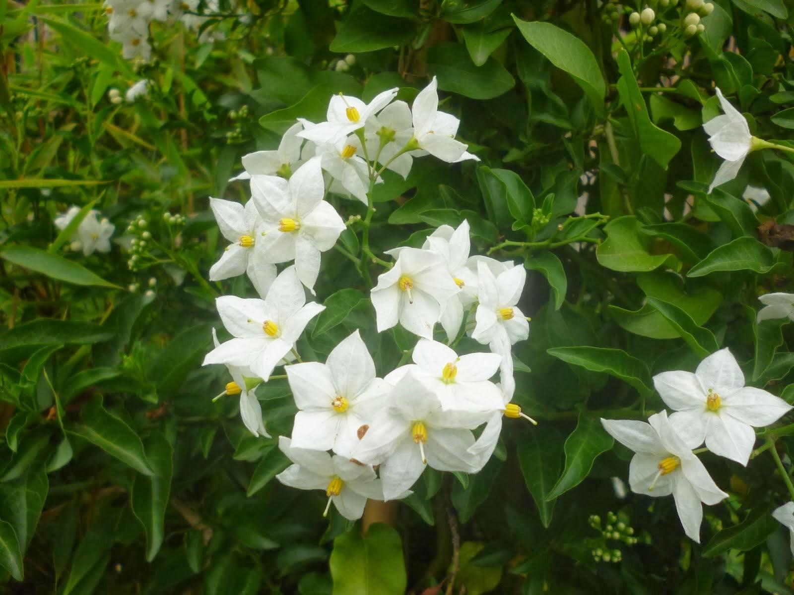 Flores de Bremen Alemania