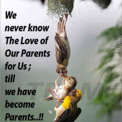 Best Quote Message About Love Of Parents