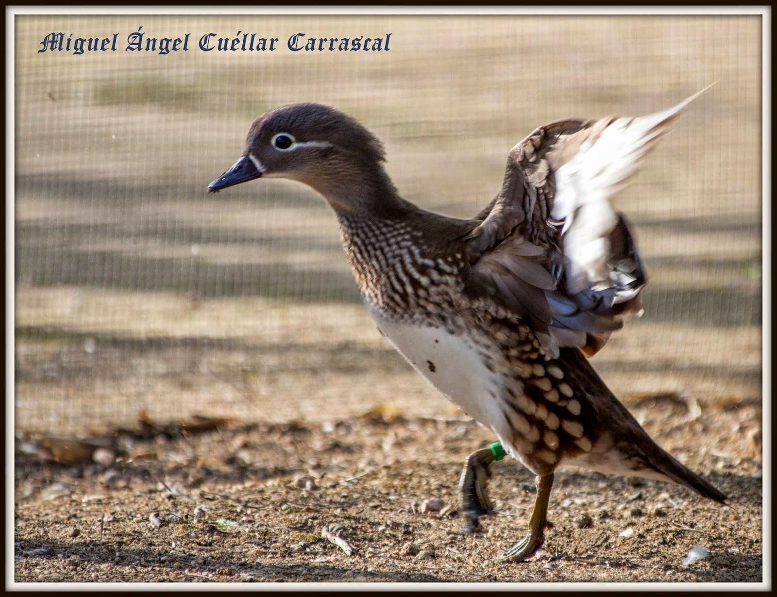 Día Mundial de los Humedales 2015.  Celebración del Grupo Local SEO-Sevilla de SEO/Birdlife en la Cañada de los Pájaros (Puebla del Río). Excursión