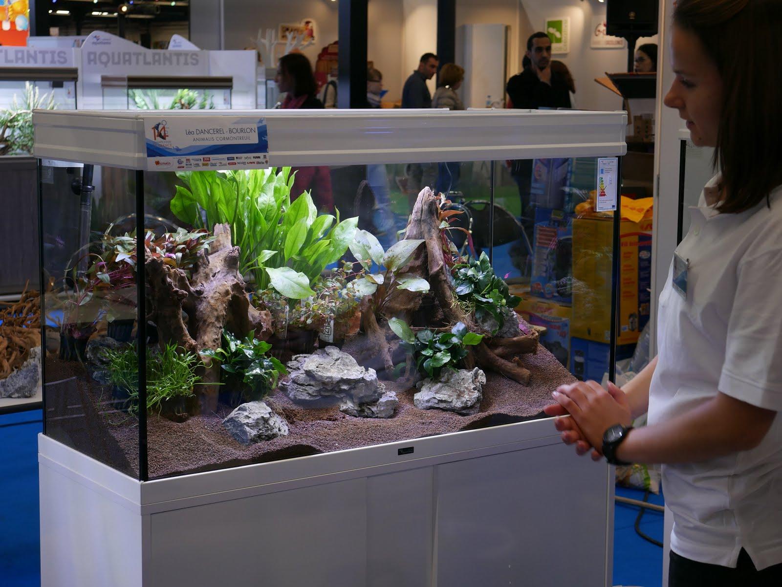 l 39 aquarium la maison championnat de france d aquariophilie animal expo 2017 la gagnante. Black Bedroom Furniture Sets. Home Design Ideas