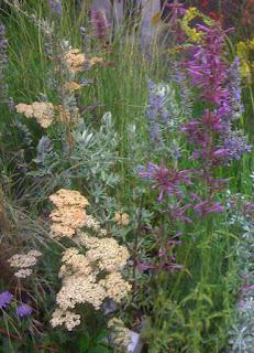 Agastache, Achillea, Cleveland Sage - and grasses